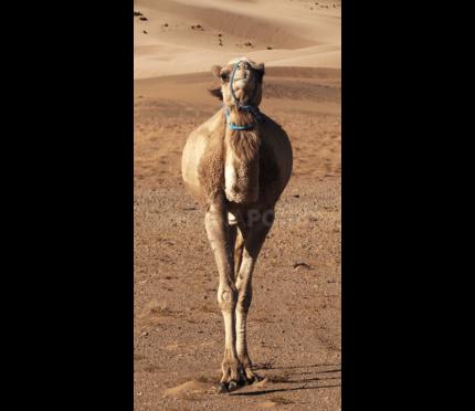 Marokko Sahara 7  –  50 x 100 cm